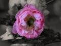 1_Vanesa-Springelyte-IIID-kl.-1